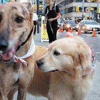 Dogs of Invictus