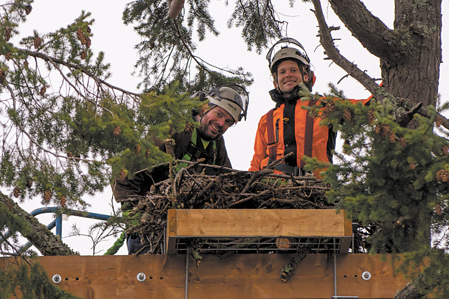 Graham Smith and Kevin Linka of Davey Tree Canada finish relocating the bald eagle nest on Signal Hill. Photo by Cpl Andre Maillet, MARPAC Imaging Services