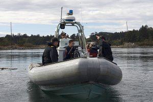 Bentinck Whale Protection