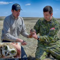 Graham Dixon-MacCallum (left) and Lieutenant-Colonel Mike Onieu, Base Commander (right), release the first burrowing owl into the CFB Suffield National Wildlife Area on May 3 as part of a new head-starting project to help this endangered species. Photo by Warrant Officer Derrick Steeves
